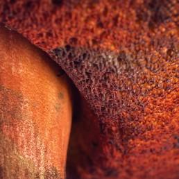 Champignon bolet rouge