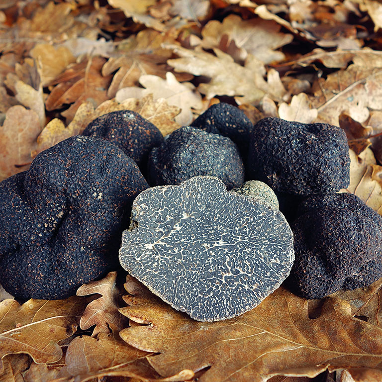 Champignon diamant noir